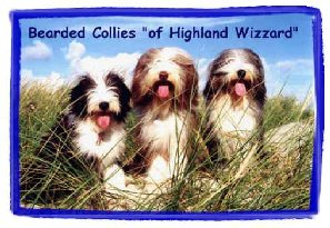 Die 'of Highland Wizzard Bearded Collies'