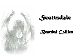 Scottsdale Bearded Collies